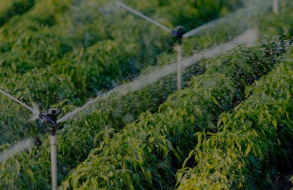 i vantaggi della fertirrigazione hydro fert